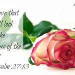 19 Verses of Hope