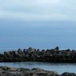 santa-cruz-harbor-lighthouse-22.jpg